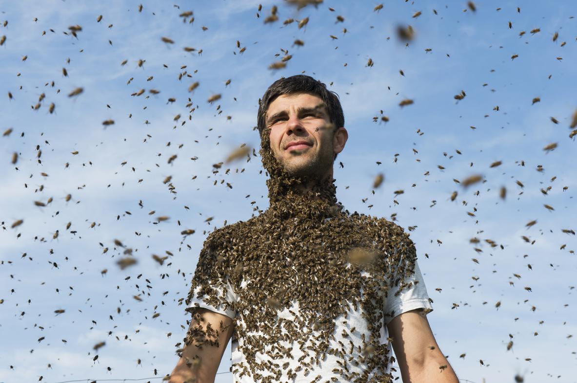 Die faszinierende Welt der Honigbienen