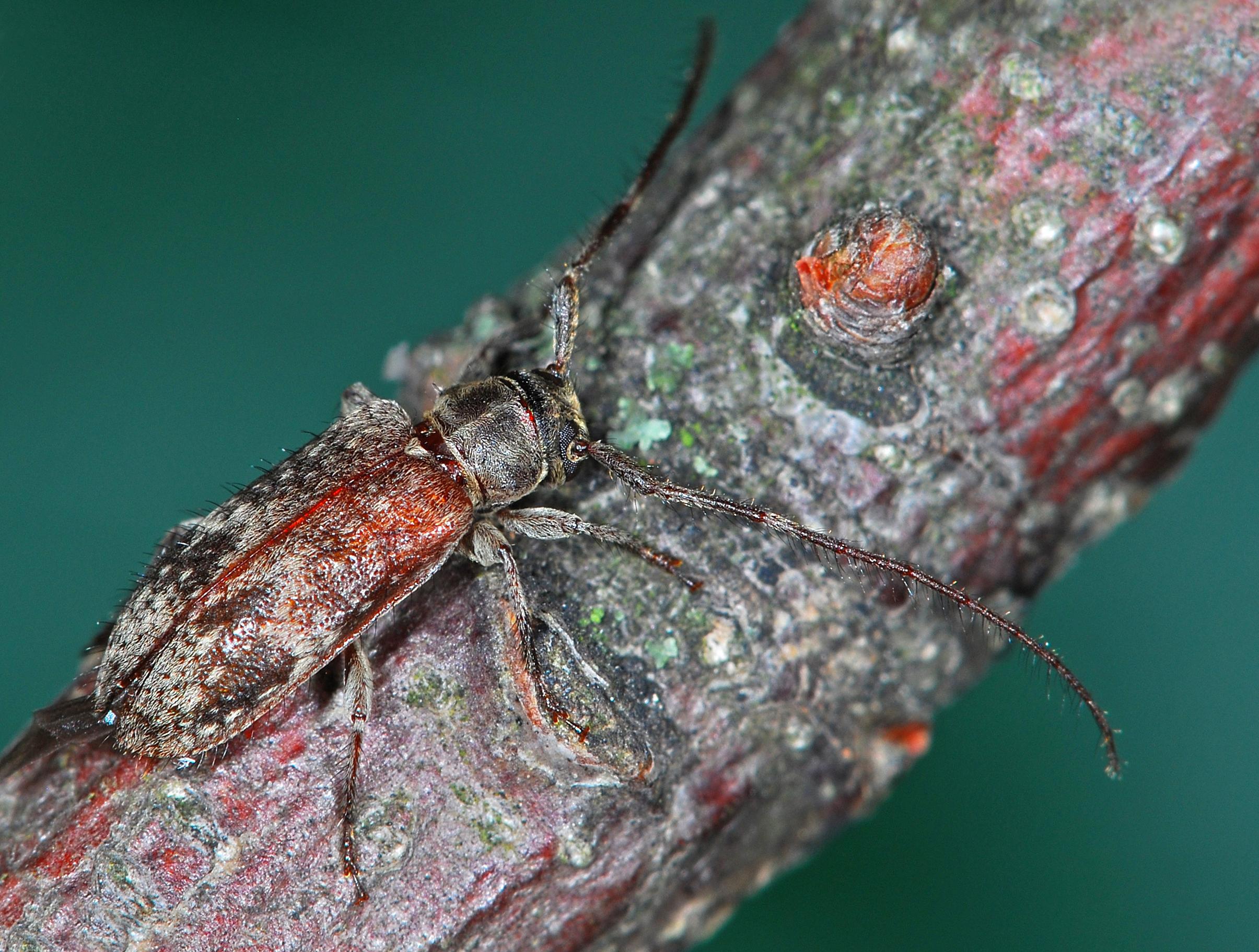 72. Entomologentagung mit Insektenschau und -tausch