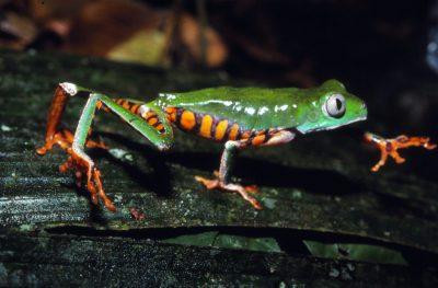 Der Froschfänger - Amazonasreise und Buchpräsentation